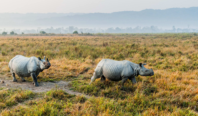 Honeymoon in Kaziranga
